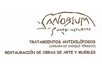 Anobium